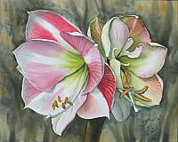 Amaryllis on Silk